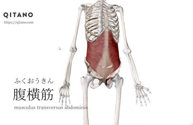 腰痛に対する骨盤ベルトの効果【赤坂けやき通り鍼灸・整骨院】【中央区・赤坂】